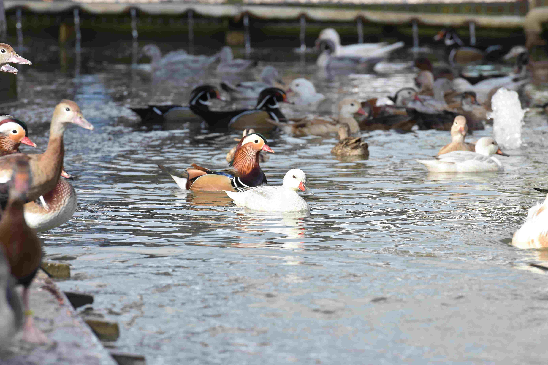 Watervogelvoer